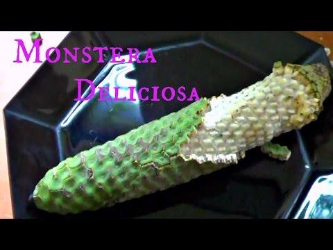 , title : 'Monstera Deliciosa Review - Weird Fruit Explorer - Ep. 108