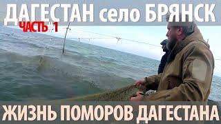 Рыбалка в кизлярском районе дагестан