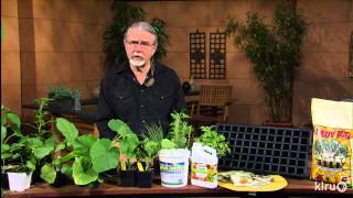 Late summer and fall vegetables | John Dromgoole | Central Texas Gardener