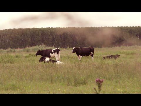 Voir la vidéo : Concours des Pratiques Agro-écologiques Prairies & Parcours anciennement appelé Prairies Fleuries