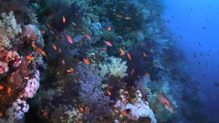 """The BEST DIVE SITES of the RED SEA - """"ELPHINSTONE"""""""