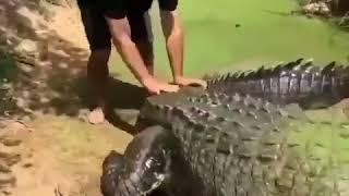 Маленький домашний питомец (животные и люди, видео 2018)