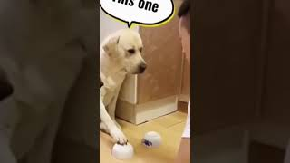 Cachorro adivinho #shorts