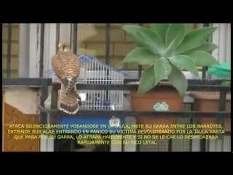 PROTECCION DE JAULAS CONTRA DEPREDADORES..