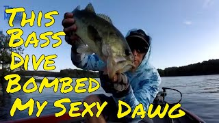 Catching Summertime Schooling Bass On Lake Of Egypt Fishing Report