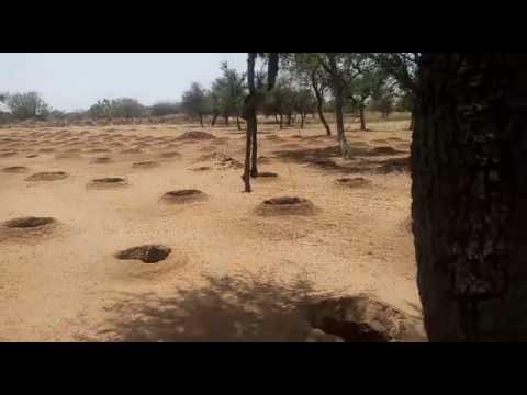 Progressive Farmer from Rajasthan- Rajnish Lambha ( Hardev Baag & Udhyan Nursery) - 9