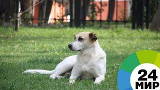 Ростовский пятиклассник организовал свой бизнес, чтобы спасти собаку - МИР 24
