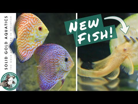 NEW FISH for the Discus Tank! // Unboxing & Discus Update