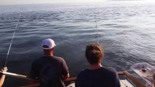 Chain tail charters