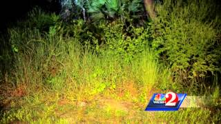 King cobra sought in Orlando area