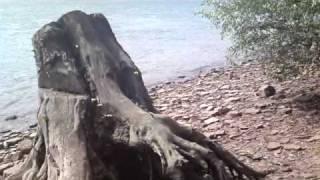 preview picture of video 'Schlange am Rhein - Kornsand.MP4'