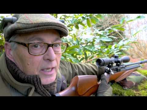 How to get grey squirrels in range