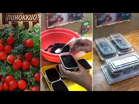 Посев томатов на рассаду  Как я это делаю