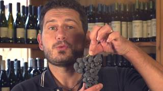 è vietata la vendita del vino fragolino?