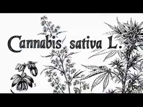 Patogeno femminile in farmacia a Samara
