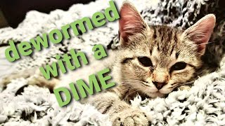 Deworming Cats Cheaply and Effectively