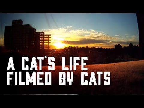 Cat Diaries: The First Movie Filmed by Cats!