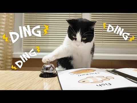 Que coisa mais fofa! O gatinho pede comida com o sino