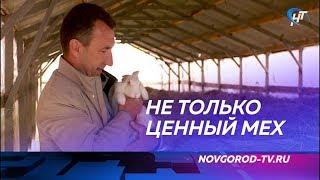 Фермер Сергей Лещенко претендует на победу в конкурсе «Агростартап»