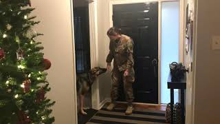 German Shepherd doesn't recognize returning soldier at first