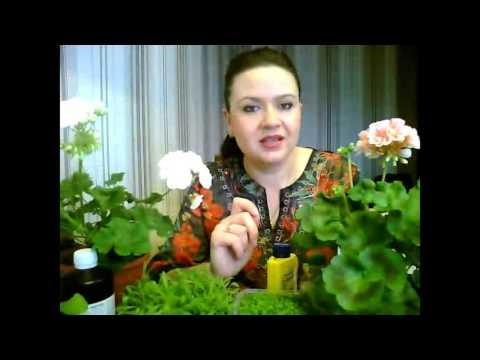 Перекись водорода для растений! Польза и вред!