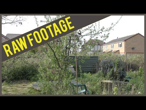 (RAW FOOTAGE) April: Allotment - Removing the plum tree