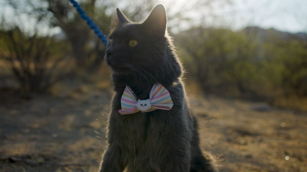 Clara Lee's Cats