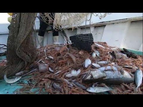 Croatie  face au déclin des populations de poissons en Méditerranée, le pari près de l'Ile de Jabuka