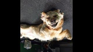 Самые смешные приколы с животными - приколы животных смех #117