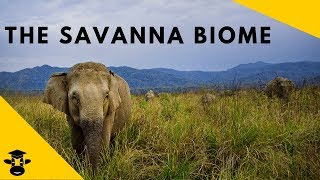 Savanna Grassland- Biomes of the world