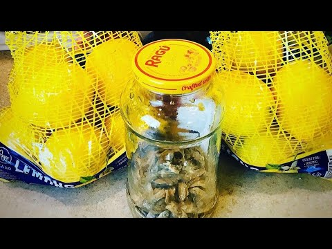 HOMEMADE GINAMOS FERMENTED ANCHOVIES FROM SURIGAO PHILIPPINES #gourmet