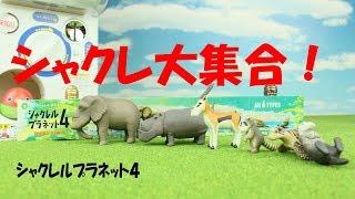 ガチャガチャのおもちゃ!シャクレルプラネット4レビュー動画