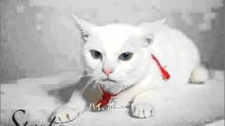 アイドル猫、あなごちゃんです!!