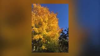 Ох, какая она - эта Осень!