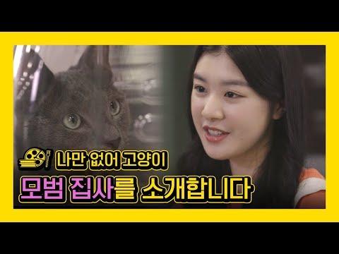 영화 '나만없어 고양이' 영상