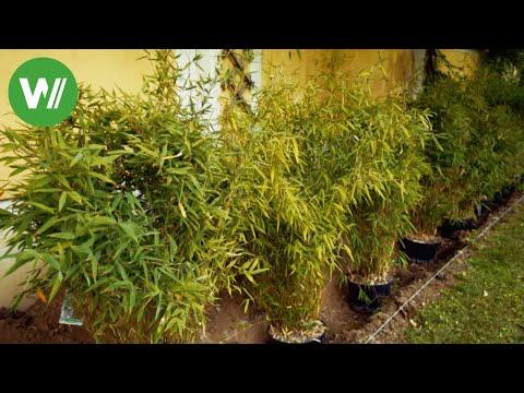 So pflanzt man eine Hecke!  mit Tipps von Gartenprofi Josef Starkl