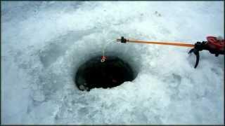 Способы ловля окуня и щуки со льда