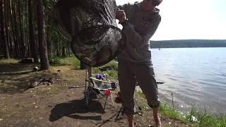 Клев рыбы в свердловской области на неделю