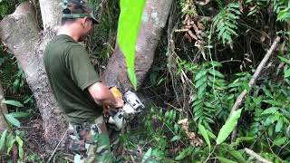 Cutting trees in the forest by Machince to make house for army In work place