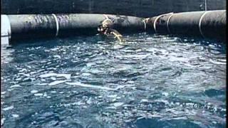 65 - Одиссея Жака Кусто - Теплокровное море