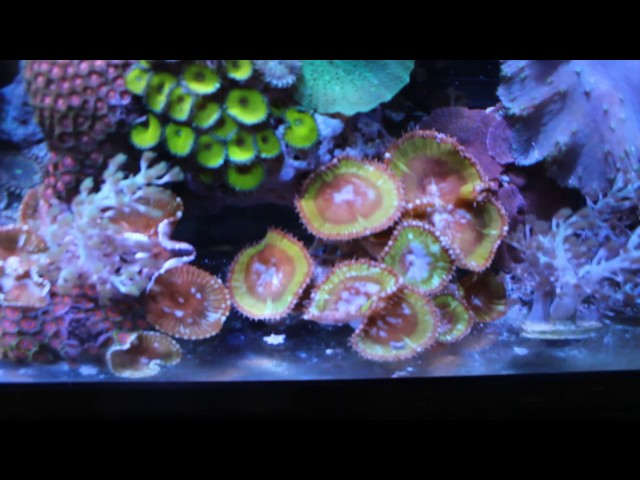 Why my Reef Tank is barebottom despite sand looking better