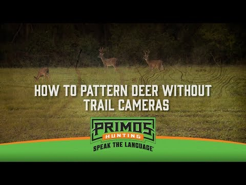 How to Pattern Deer Without Trail Cameras video thumbnail
