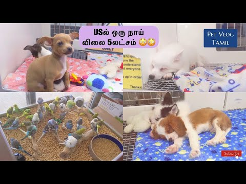 , title : 'USல் நாய் விலை என்ன தெரியுமா?| US Pet Vlog in Tamil|Pets Centre in USA|Tamil Vlog