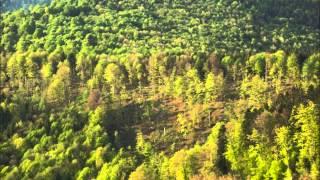 """Shostakovich """"Song of the Forests"""" Yevgeny Mravinsky"""