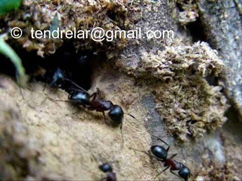 comment traiter un nid de fourmis la r ponse est sur. Black Bedroom Furniture Sets. Home Design Ideas