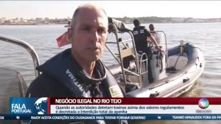 Fala Portugal - A máfia da amêijoa