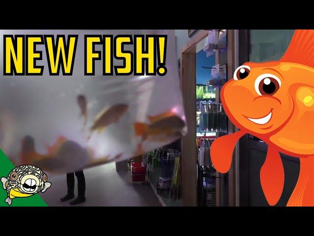 Apistogramma Cacatuoides! Rainbowfish! Discus! Red Koi Angelfish #Daily Dose 29