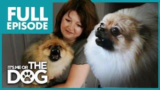 Monster Pomeranian: Teddy Pom-Pom | Full Episode | It's Me or the Dog