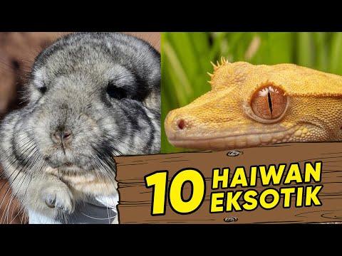 10 Haiwan Eksotik Yang Boleh Dibela