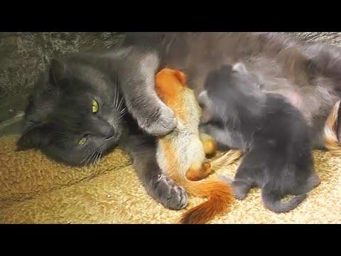Γάτα υιοθέτησε τέσσερα μικρά... σκιουράκια